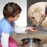 Copiii si animalele de companie: Reguli de sanatate