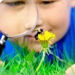 Solutii pentru diverse intepaturi de insecte