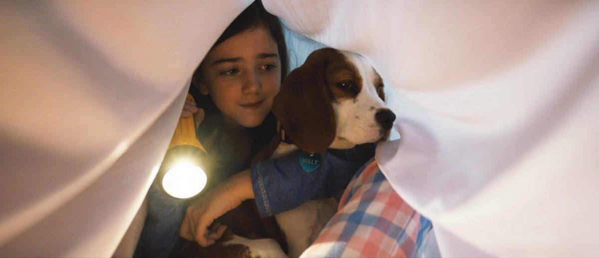 """,,Cainele, adevaratul meu prieten 2"""" asteapta iubitorii de animale in cinematografe din 21 iunie"""