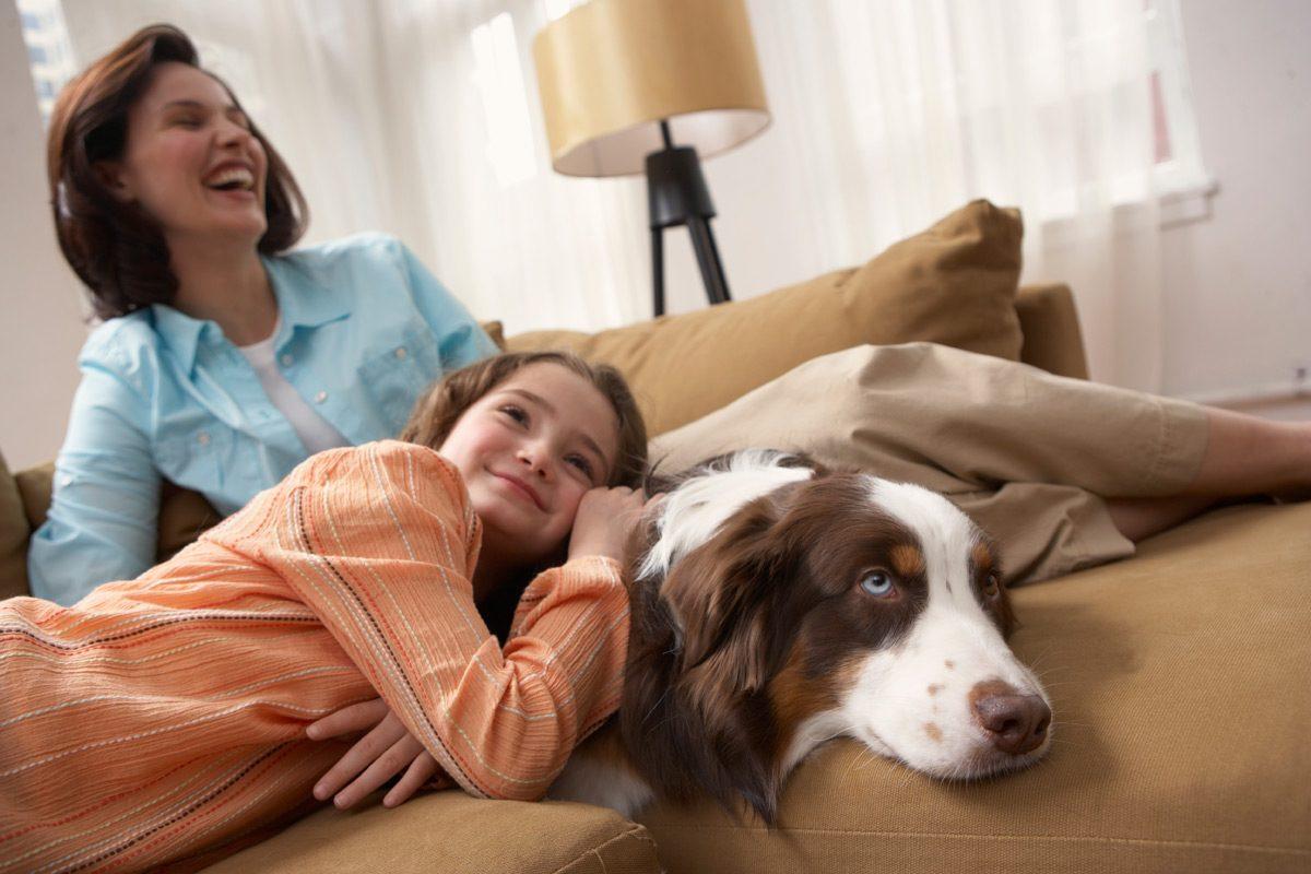 Recomandari pentru familiile care vor un animal de companie